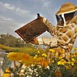 Méhész, fodrász, bőrgyógyász - rendőrök másodállásban