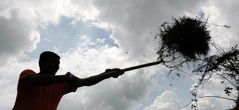Tízmilliókért kaszálja le idén az állami földeket az egykori Főkert-vezér