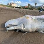 Egyre több bálna vetődik partra és pusztul el Nagy-Britanniában