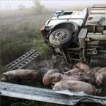 150 malaccal borult fel egy kamion