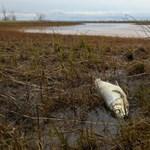 Beárazták a norilszki olajkatasztrófát, hatalmas a kár