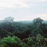 Drónnal találtak az esőerdő mélyén egy ismeretlen őslakos törzsre
