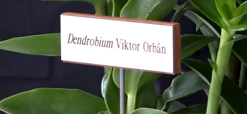 Ezt az orchideát nevezték el Orbánról – videó