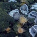 Videó: Hatalmas polipóvodát találtak a tengerfenéken