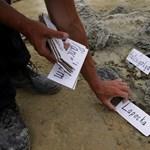 Dinót találtak Iharkúton - fotók