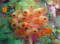 Három részre vágtak a tudósok egy tengeri állatot, az eredmény még őket is meglepte