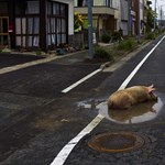 Emberi hiba okozta a fukusimai balesetet