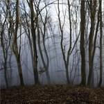 Ködös péntek után esős, szeles hétvége jön
