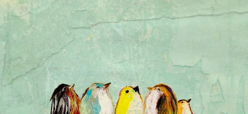 Cuki festmények madárrajongóknak