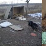 Láncra kötött kutyát hagytak halálra fagyni egy pesti társasház udvarán