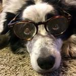 Szuperintelligens kutyák lepték el az ELTE egyik tanszékét