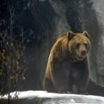 Medve sétálgatott az utcán Füzesabonyban