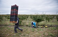 Irtóznak a gazdák a szövetkezéstől, pedig fejük felett lebeg a törvény