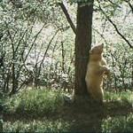Szőke medvét találtak - fotó