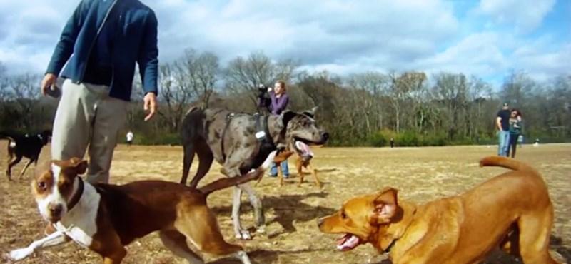 A nap videója: egy hibátlan nap a kutyaparkban