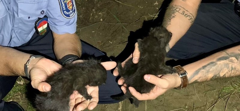 Élve temetett el kismacskákat egy nő Budapesten