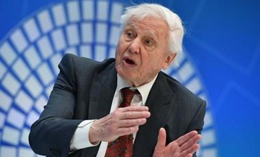 A 94 éves David Attenborough regisztrált az Instagramra, hogy ott is figyelmeztessen: baj van