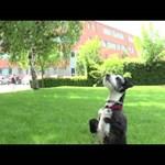 """Videó: """"Igazából egy szuperjó játék"""" - amikor a kutya frizbizik"""