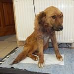 Megkéseltek egy kutyát Veszprém megyében, rendőrök vitték orvoshoz – videó