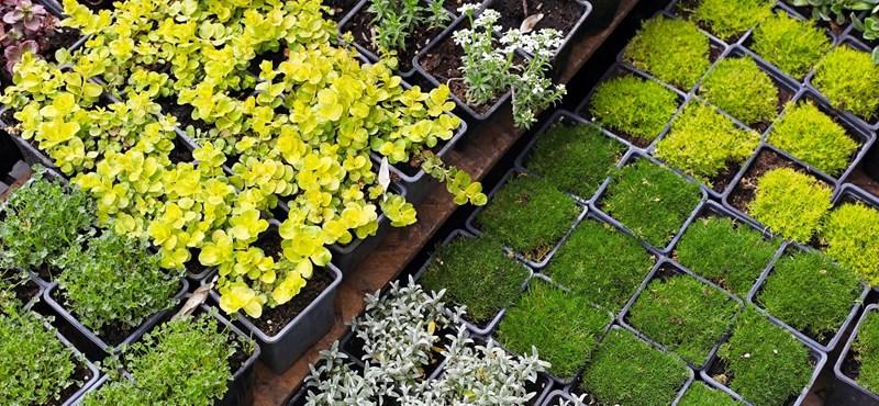 Sikertörténet: kertészet a digitalizáció dzsungelében