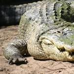Hogyan győzte le az aligátort egy tízéves kislány?