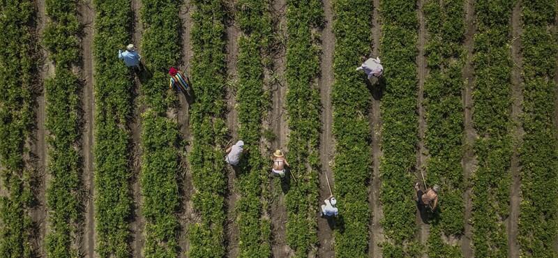 Két és félszeresére nőtt egy év alatt a Magyarországon dolgozó ukránok száma