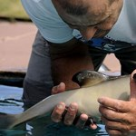 Videó: úszni tanul a megmentett delfinbébi