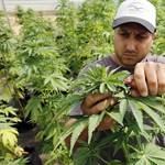 Már Grúziában is legálisan lehet marihuánát fogyasztani