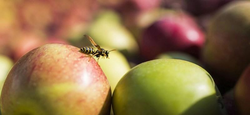 Almából készítettek egyszer használatos edényeket orosz kutatók