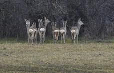 Foggal-körömmel védi vadászterületét a Mészáros família a pernyertes vadászokkal szemben