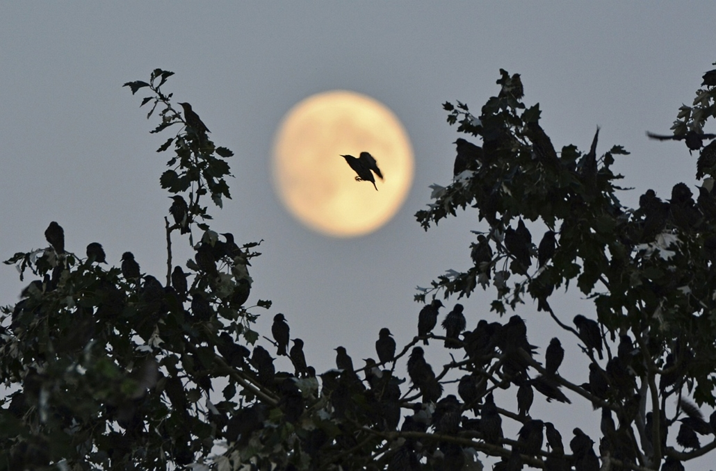 NE HASZNÁLD! - canon év természetfotósa, természetfotó, XI. Napnyugtától napkeltéig, 1. díj - A Hold árnyéka