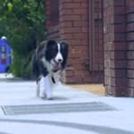 Videó: Végre kiderült, mit fotózna le egy kutya