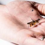Megépítették a világ legkisebb drónját, rajta miniatűr napelemekkel