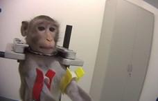 Videóra vették az állatkínzást a hamburgi laborban, most bezárhatják az intézményt