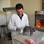 Fotó: csöppnyi medvebocsot mentettek meg Törökországban