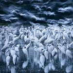 Hazai fotós nyerte a Big Picture természetfotó-pályázatát