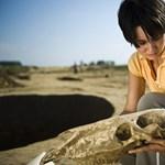 Lerövidítené a kormány az építkezéseknél a régészeti feltárást