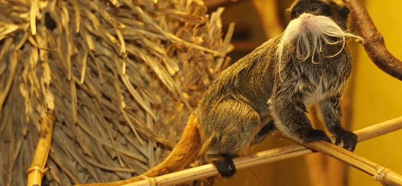Fotó: Új lakók érkeztek a Nyíregyházi Állatparkba