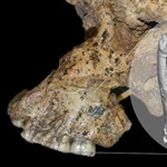 Megvizsgálták 70 olyan ember fogát, akik 3700-5600 éve éltek