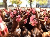 Minden dolgozót evakuáltak egy kecskeméti baromfifeldolgozó üzemből