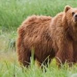 Behúzott egyet a medvének, így maradt életben egy német túrázó a Kárpátokban