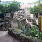 Koronavírusos lett a prágai állatkert egyik gorillája és két oroszlánja