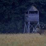 Innovációs és technológiai felügyelet alá került a vadászati világkiállítás