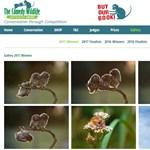 Magyar fotós bénázó bagolyról készült képe az idei legviccesebb állatfotó
