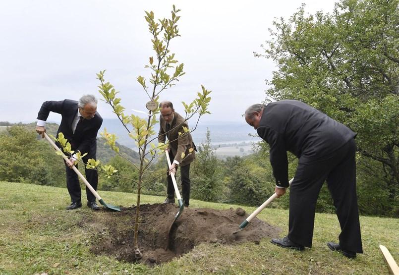 Orbán és a csecsemők fái: régi terv, és rég tudják, hogy elbukik