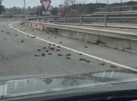Tömeges madárpusztulás sokkolja a spanyolokat, még rejtély, mi áll a háttérben