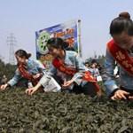 Skót teaexport Kínába: normális?