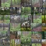 Egy riasztó trendet figyeltek meg Európában: alultápláltak a fák