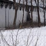 Sükösdi hodálytűz: 11 ezer tyúk pusztult el