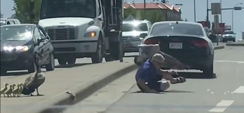 Segíteni akart az autós a bajba jutott vadlibákon, nagyon nem kellett volna – videó